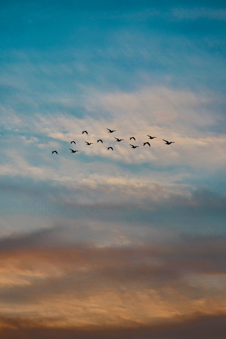 photo of a flock of flying birds